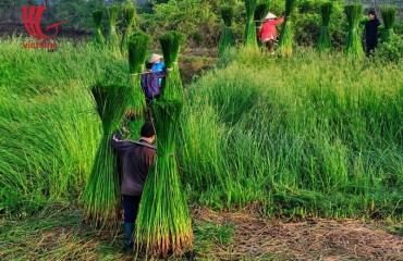 Festivals, Harvest and The impact on the handicrafted industry in Vietnam